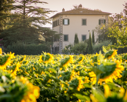 Sunflowers Tuscany Villa Vacation